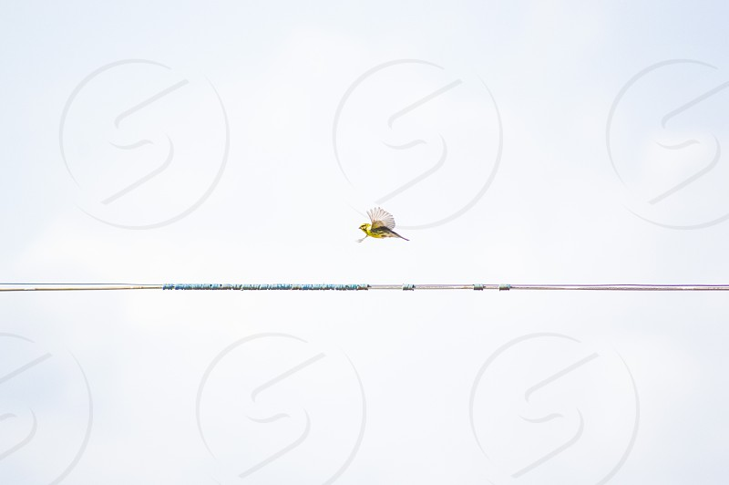 low angle photography of yellow flying bird photo