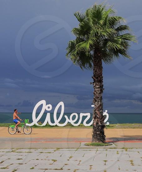 liber palm tree cyclist shore meme photo