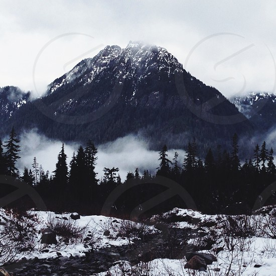 mountain with trees covered with snow photo