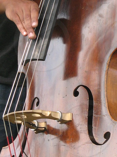 Bass fiddle (close-up) photo