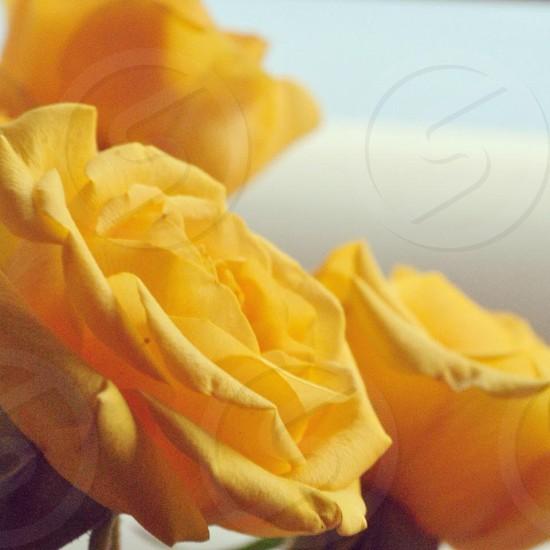 yellow.  photo
