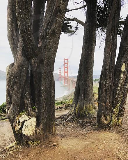 Goldengate Bridge California  photo