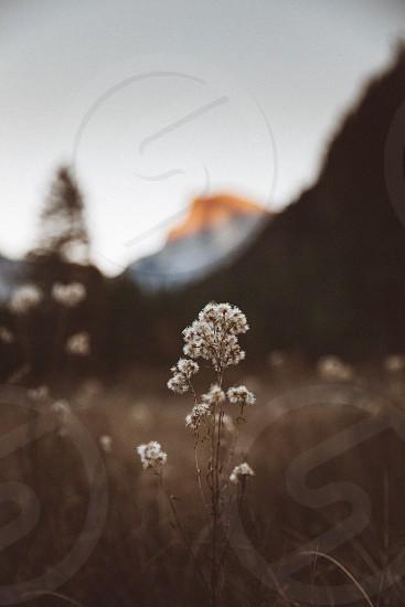 Landscape flower calm golden mountain granite  photo