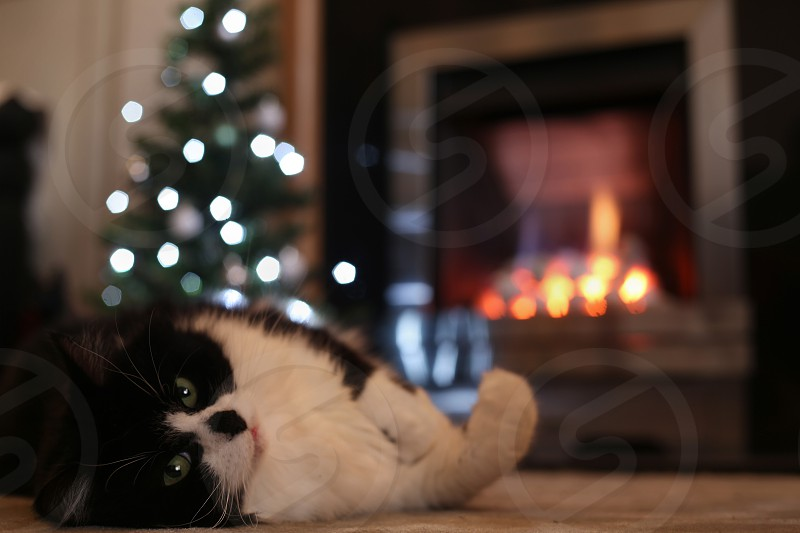 Keeping cosy next to the fire photo