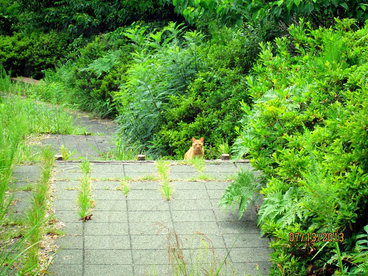 orange tabby cat on gray concrete pavement surrounded by green plants during daytime photo