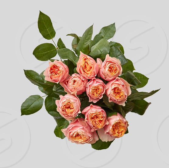 Creative pink bouquet of rose with green leaves on gray background as a concept of a holiday greeting card for Mother's Day or March 8 . Flat lay composition. photo