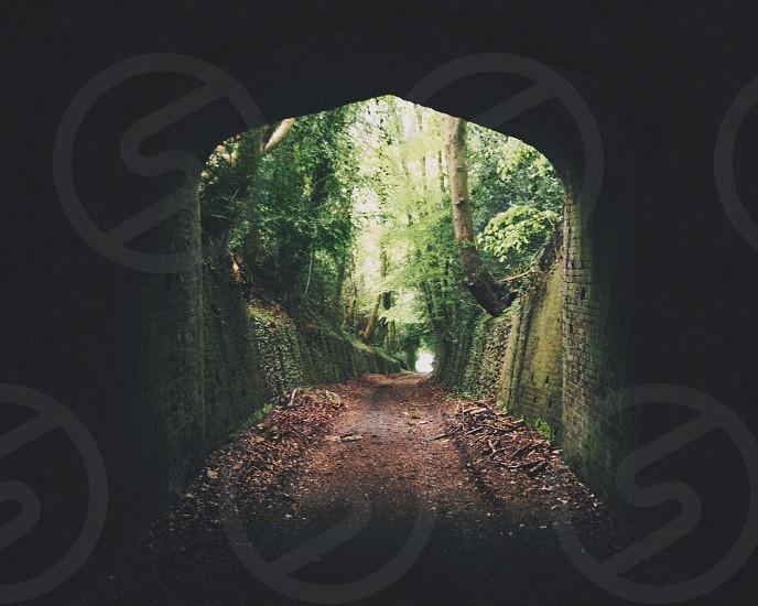 Overgrown tunnel photo