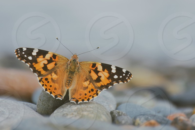 black and orange butterfly on stone photo