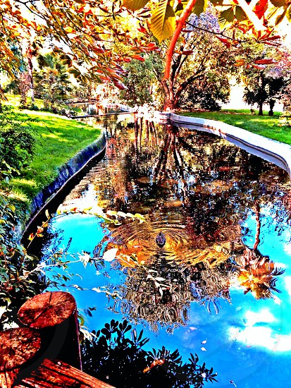 Beautiful natural nature pond duck reflection flowers plants trees colourful brightness garden park sunny.  photo