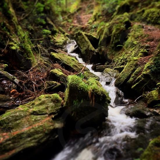 Puck's Glen Dunoon Scotland forest landscape  photo