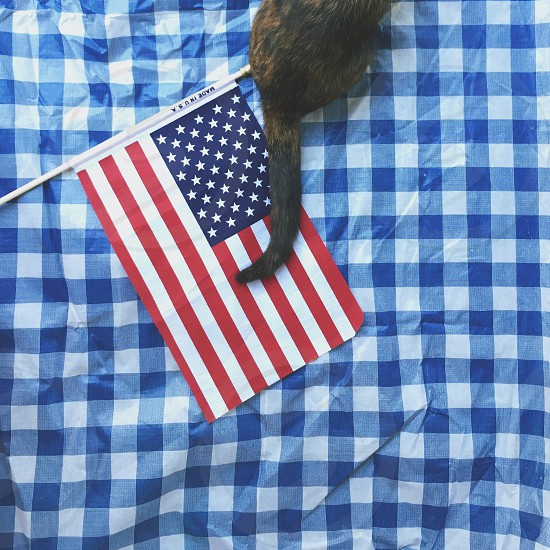 Independence Day Fourth of July United States flag American American flag USA blue red white checkered picnic blanket picnic blanket summer summertime July America democracy freedomcat kitten pet from above  photo