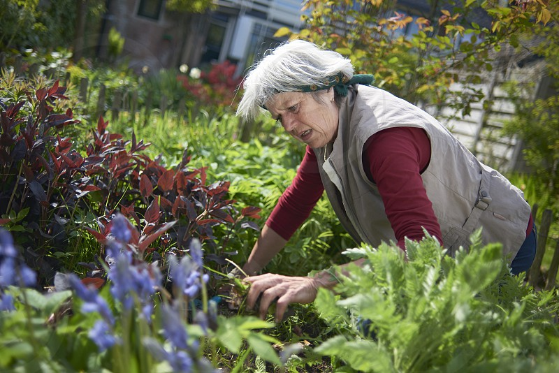 Healthy elderly woman hard at work gardening in her back yard in spring sunshine photo