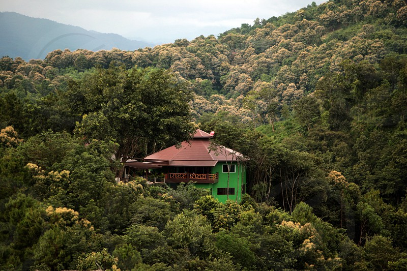 a Hotel and Restaurant in the Forest near the village of Fang in the north of chiang mai in the north of Thailand in Southeastasia.  photo