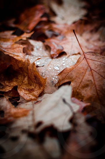 Leaves close up water droplets photo