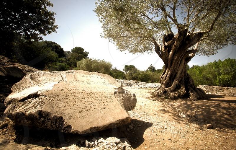 stone tablet near the tree  photo
