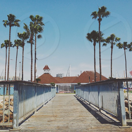 wooden footbridge and palm tree photograph  photo