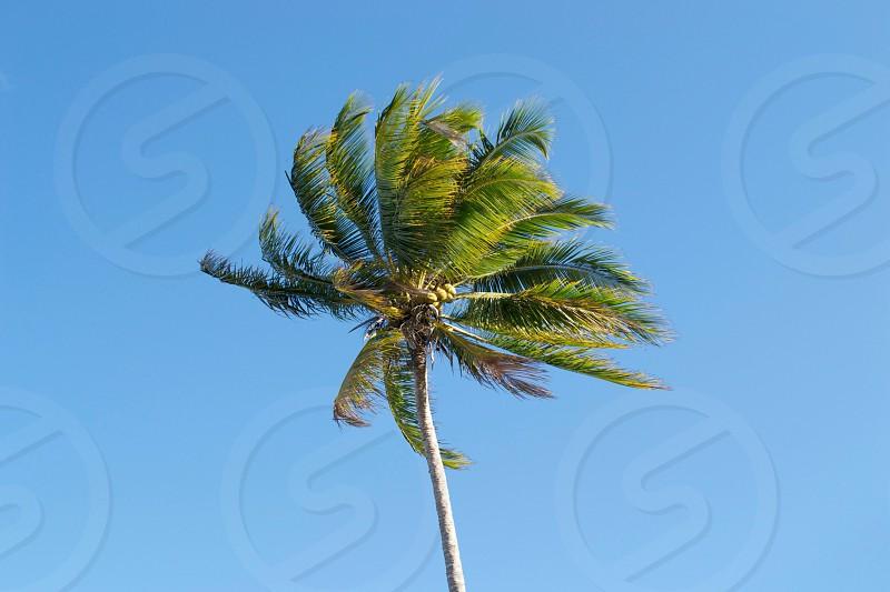 Island life photo
