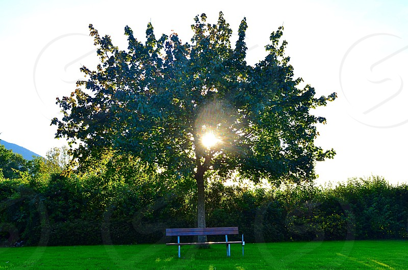 bench under a tree photo