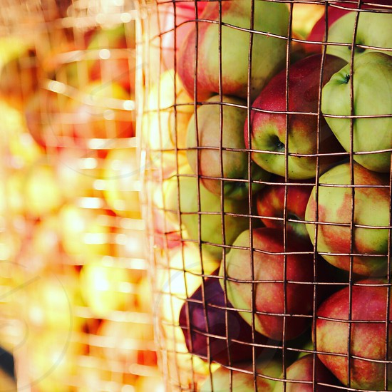 Farm fresh apples apple harvest harvested fruit fruits photo
