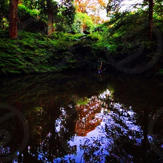 Richmond Park - London photo