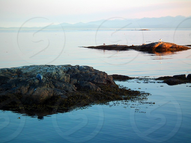 Photo of a seal laying on the rocks and seagull in the bay at Victoria Bc photo