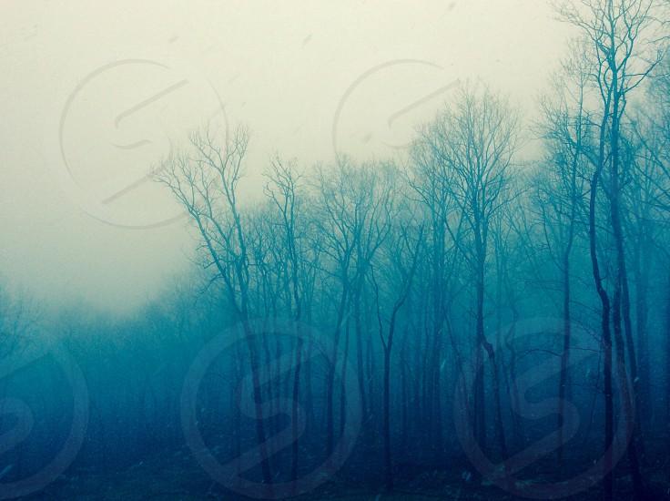 hazy tree lining photo