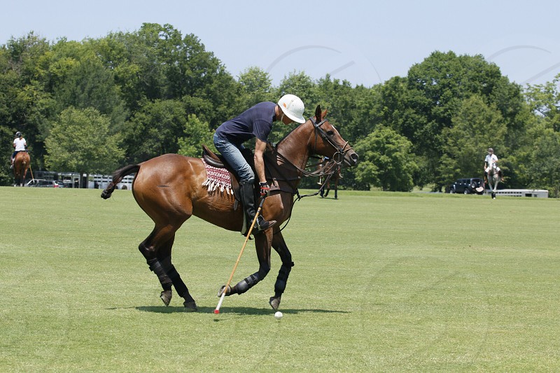 Polo is my hobby photo
