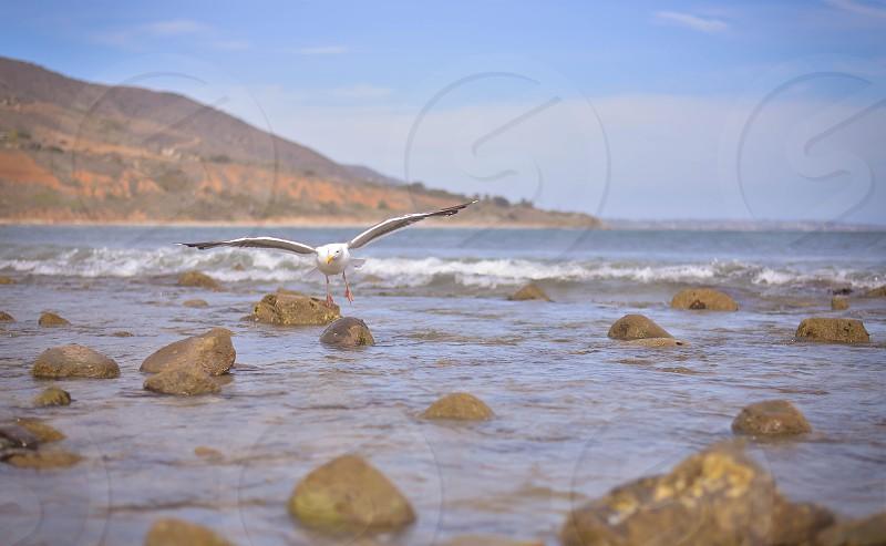 Seagull in flight on the beach; ocean; rocks; beautiful photo