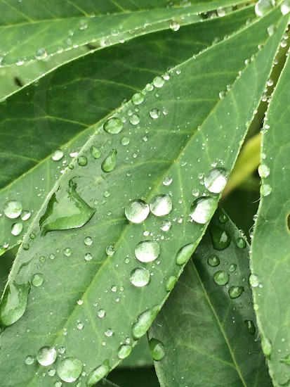 Fresh raindrops photo