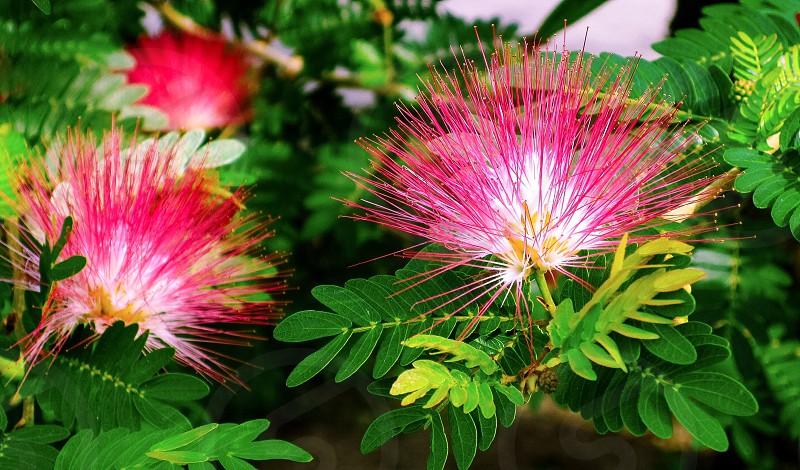 Flower • Pink photo