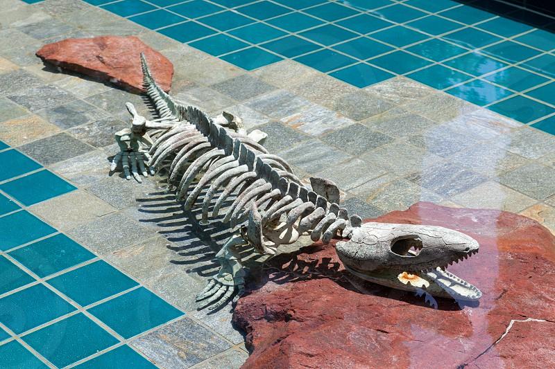 Alligator Skeleton under Water photo