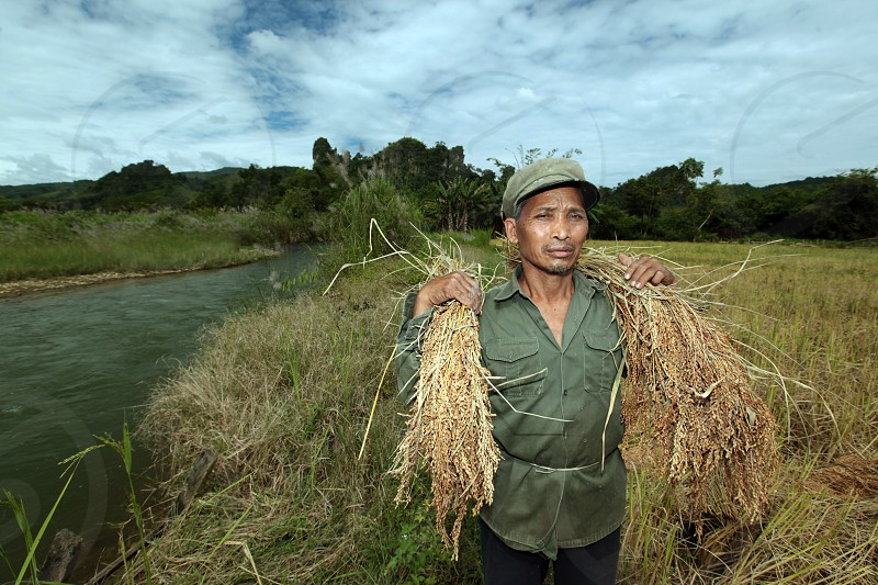 a rice farmer near the Village of Muang Phou Khoun on the Nationalroad 13 on the way from Vang Vieng to Luang Prabang in Lao in southeastasia. photo