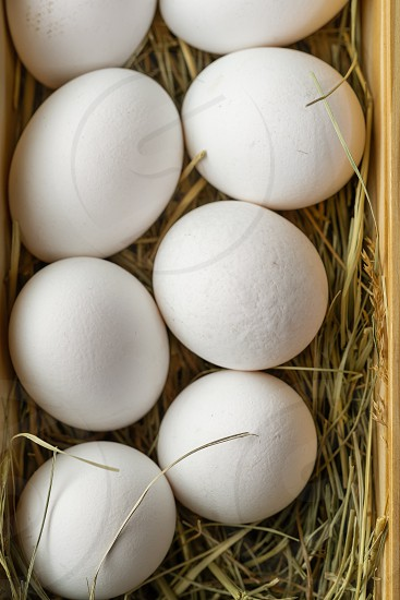 Fresh white eggs in straw photo