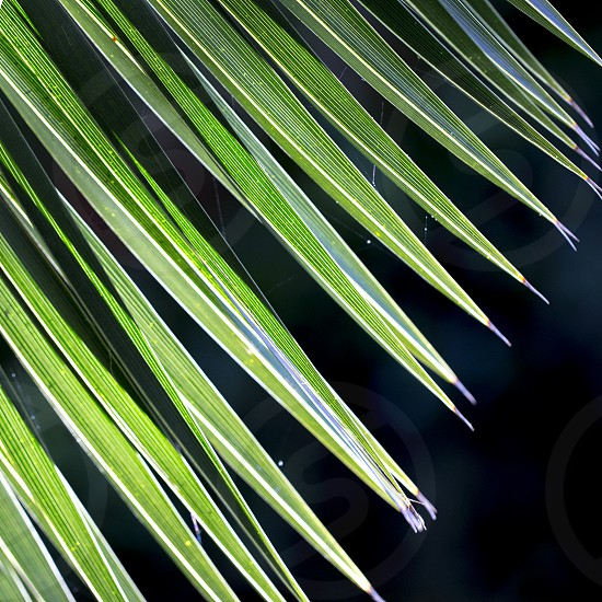 Close up photo of green palm tree leaf on dark background sunlight effect photo