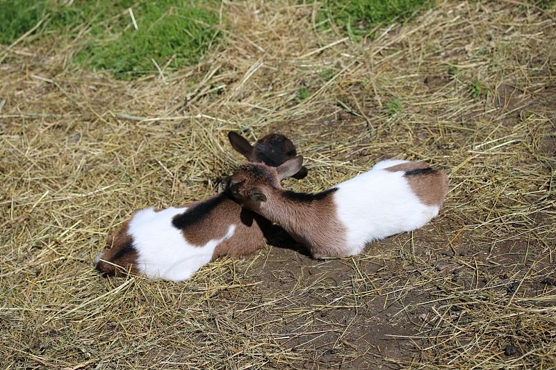 Little lovers photo