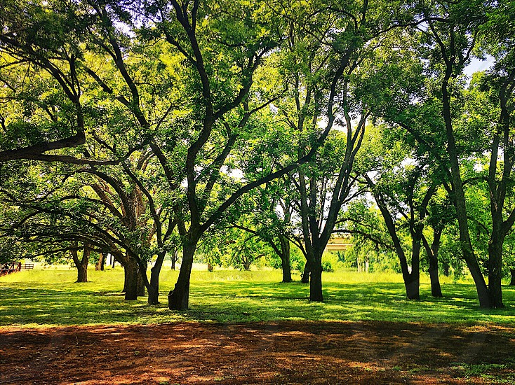 Park shade trees greenery lush lawn path woodland forest grass picnic sunny summer spring photo
