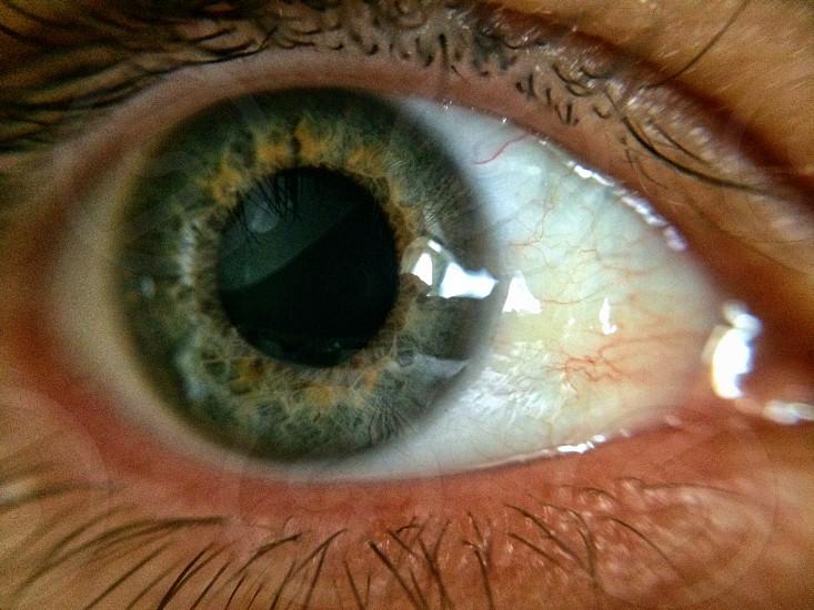 brown and green eye photo