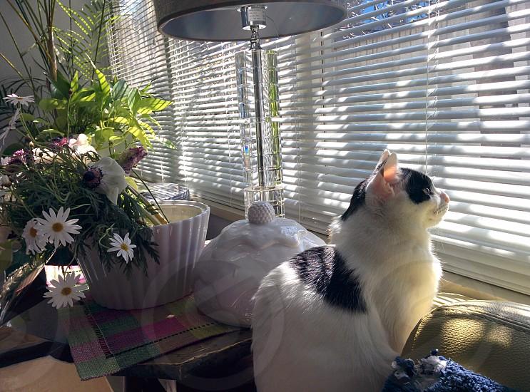 spring cat photo