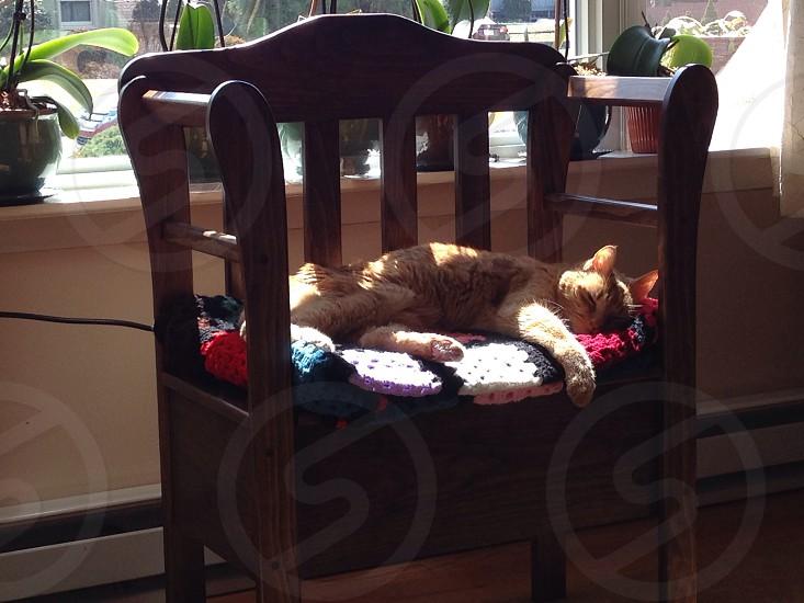 tabby cat sleeping on a wooden armchair photo