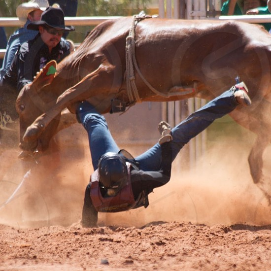 cowboy falling down on brown sand from cow during rodeo match photo