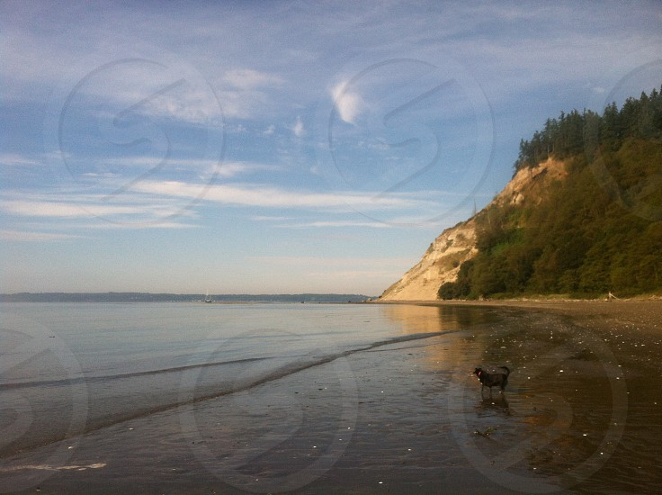 Double bluff photo