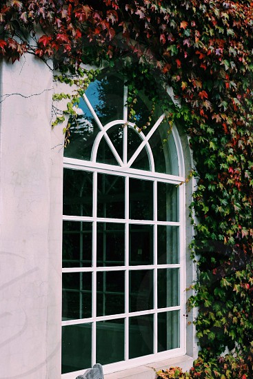 green and red leaves surrounding white window pane  photo