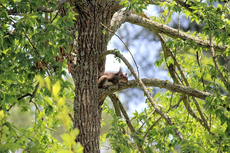 squirrel tree animal wildlife nature sleep photo