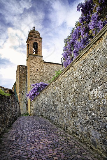 Tuscany wisteria photo