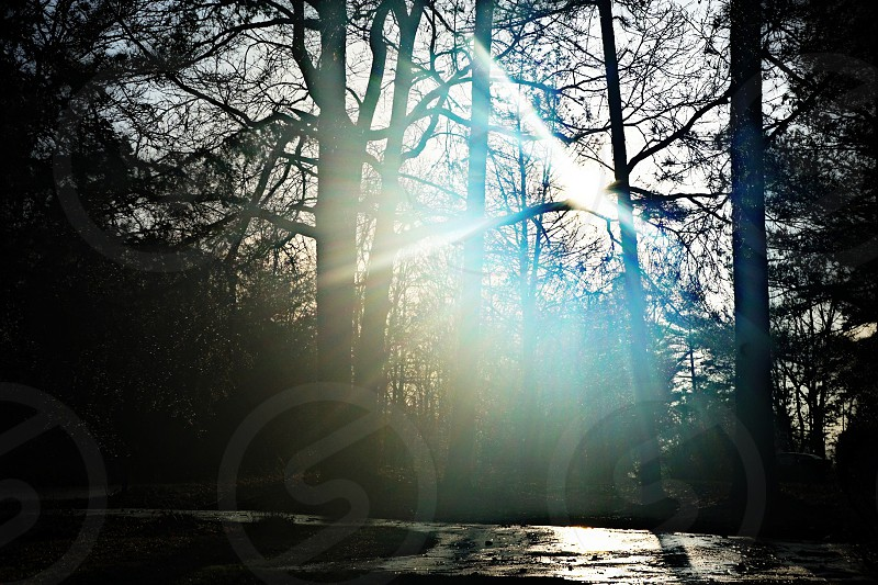 sunlight passing through trees photo