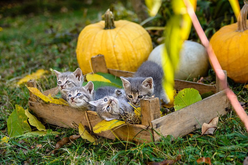 Kittens in the backyard photo
