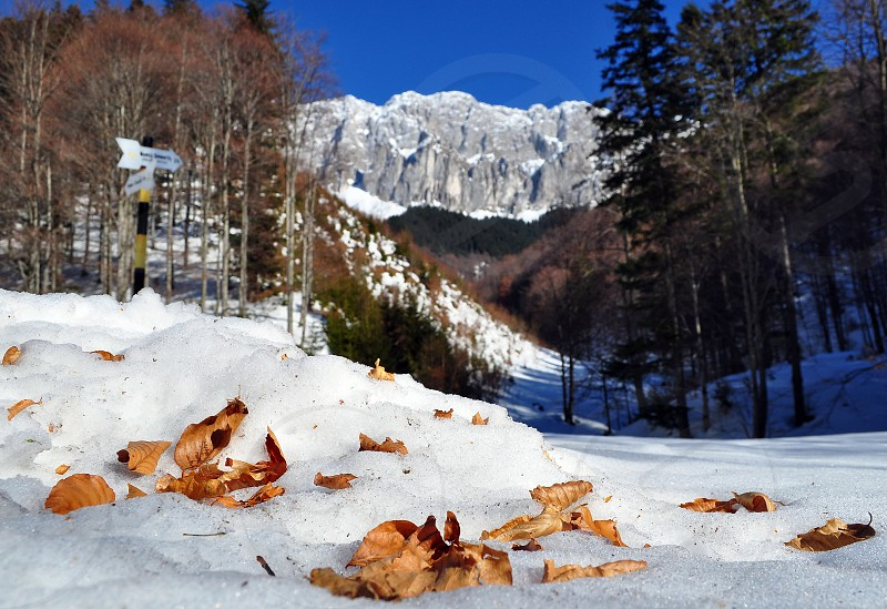 Winter leafs photo