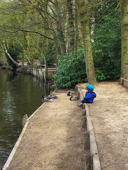 Little Brother ducks calm water & trees.  photo