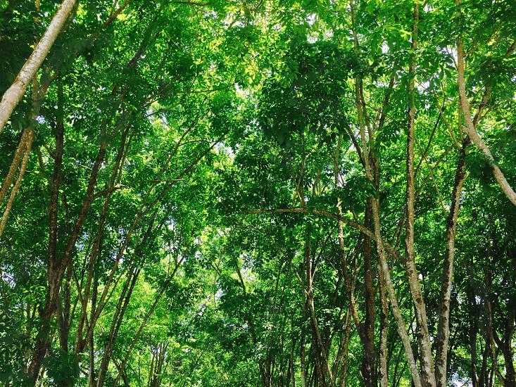 普吉岛的热带雨林 photo