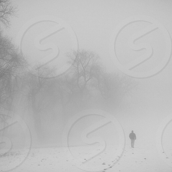 person walking next to trees in snow photo